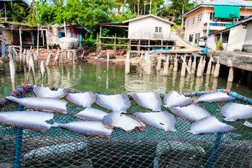 Fish drying in the sun, food background