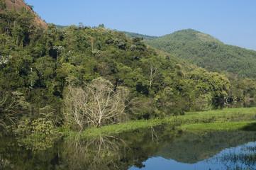 Trecho de mata natural em Paraibuna (SP)