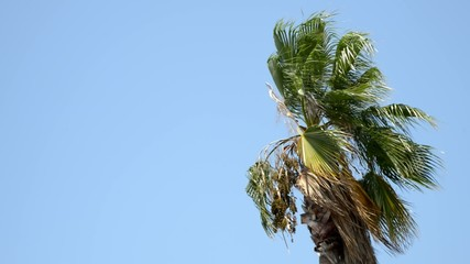 Video of a palm tree blowing in a gentle breeze