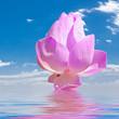 canvas print picture - lotus rose