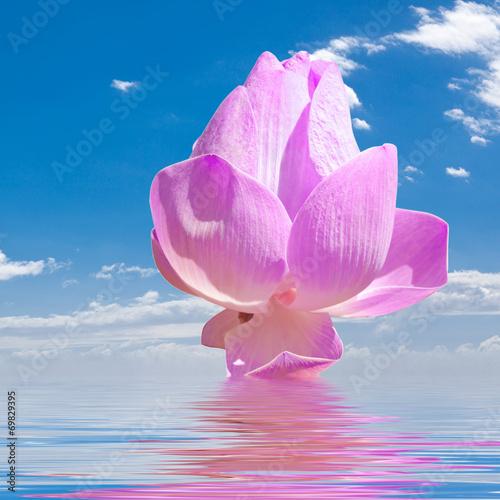 canvas print picture lotus rose