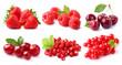 Red berries - 69829789