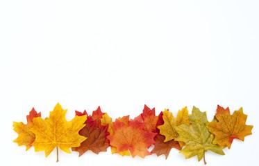Thanksgiving Autumn Background on White