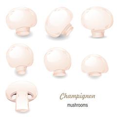 mushroom champignon