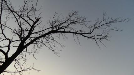 Ветка на фоне неба
