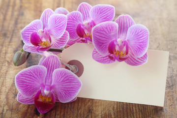 Blank Paper Label with Orchids