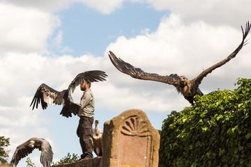 Oiseaux Vautours avec leur dresseur