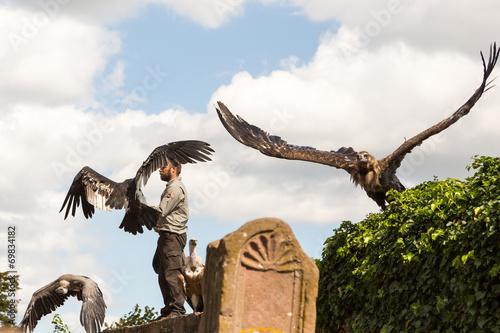 Aluminium Uil Oiseaux Vautours avec leur dresseur