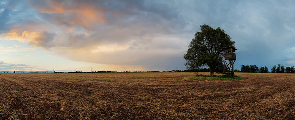 Plowed field Panorama with tree at sunset