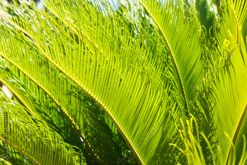 canvas print picture Green Palm