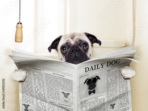 Deurstickers Franse bulldog dog toilet