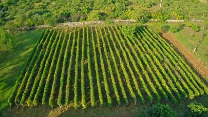 Vineyard aerial circular shoot