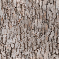 seamless bark tree