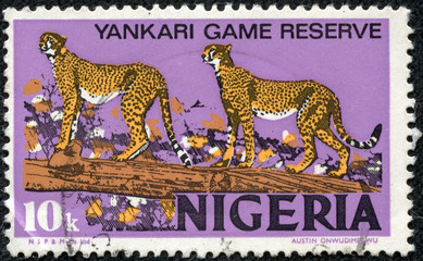 stamp printed in Nigeria shows African Leopards