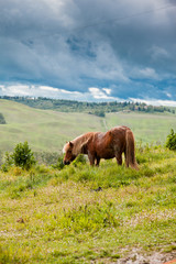 Horse in Tuscany