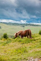Horse in Tuscany