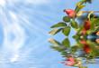 Hagebutten mit Sonnenstrahlen und Flood