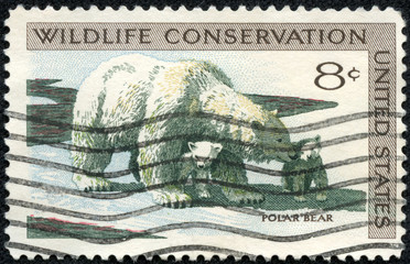 Stamp printed in USA shows the Polar Bear