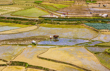 nepalese farm life