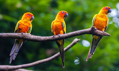 Exotic parrots sit on a branch, wildlife