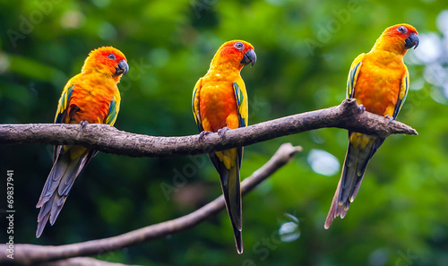 Foto op Canvas Toekan Exotic parrots sit on a branch, wildlife