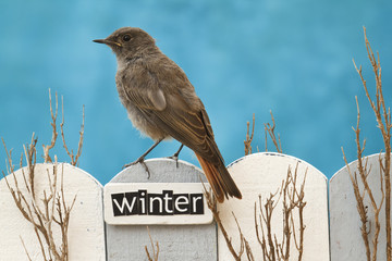 Bird perched on a fence decorated with the word Winter