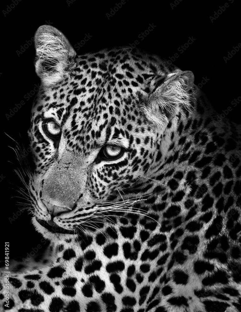 photo sur plexiglas leopard in black and white nikkel. Black Bedroom Furniture Sets. Home Design Ideas
