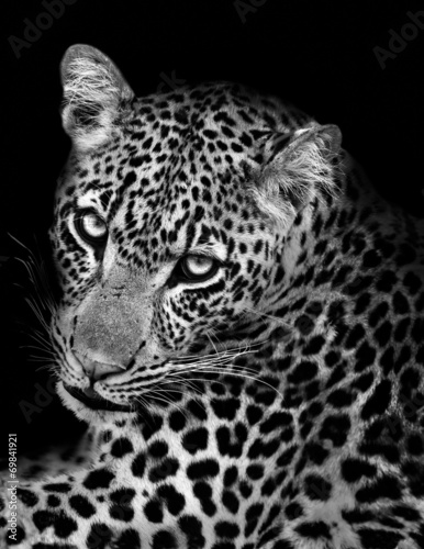 Canvas Luipaard Leopard in Black and White