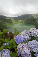 Hydrangea flowers on the volcano