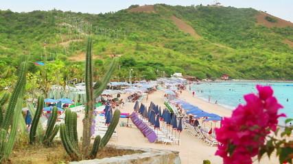 cactus and tropical beach in Thailand
