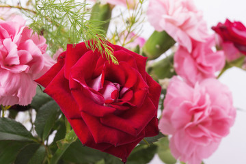 bouquet of red and pink roses isolated on the white background