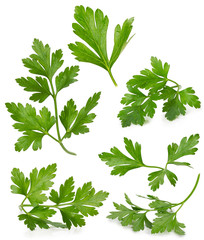 set with parsley leaves isolated on the white background