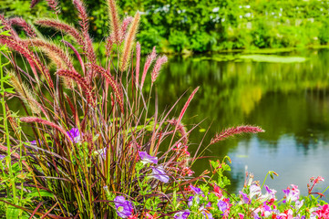 Purple flowers on a lake