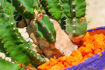 Cactus in orange stones