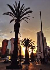 Palmen Stadt