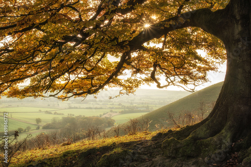 Stunning Autumn morning sunlight lights landscape through golden © veneratio