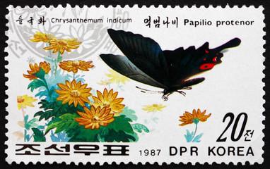 Papilio Protenor and Chrysanthemum