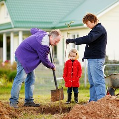 Little girl and her grandparents planting a tree