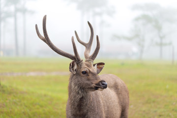 deer stag in Autumn Fall forest