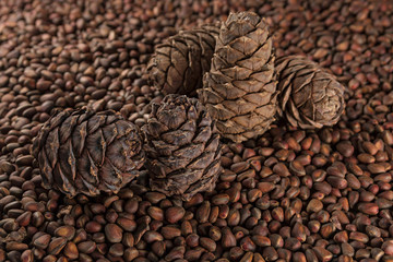 pine cones and pine nuts