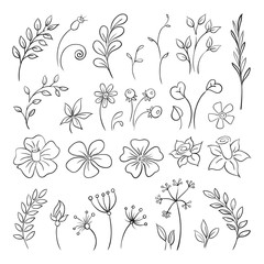 Doodle elements for design. Flowers, buds, leaves.