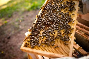 Bienen wimmeln auf Wabenrahmen
