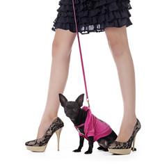 femme promenant chihuahua