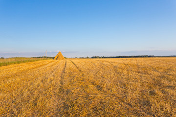 Piled hay bales on a field