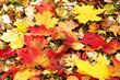 canvas print picture - abgefallene Herbstblätter