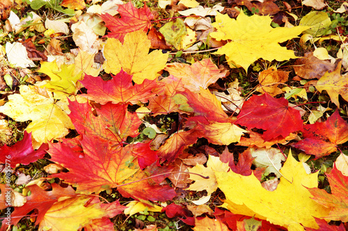 canvas print picture abgefallene Herbstblätter