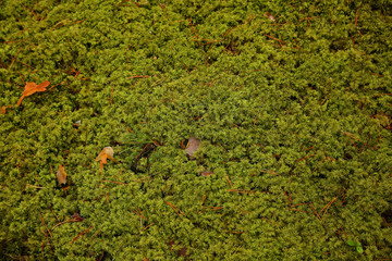 The moss in the forest