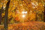 Fototapety Beautiful autumn tree with fallen dry leaves