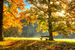 Leinwanddruck Bild - Beautiful autumn tree with fallen dry leaves