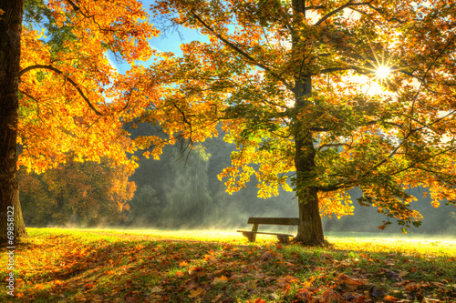 Leinwanddruck Bild Beautiful autumn tree with fallen dry leaves